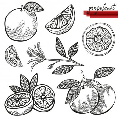 grapefruits set