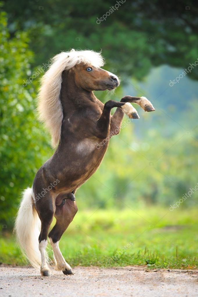 ᐈ Baby Miniature Horse Stock Pictures Royalty Free Small Horse Images Download On Depositphotos
