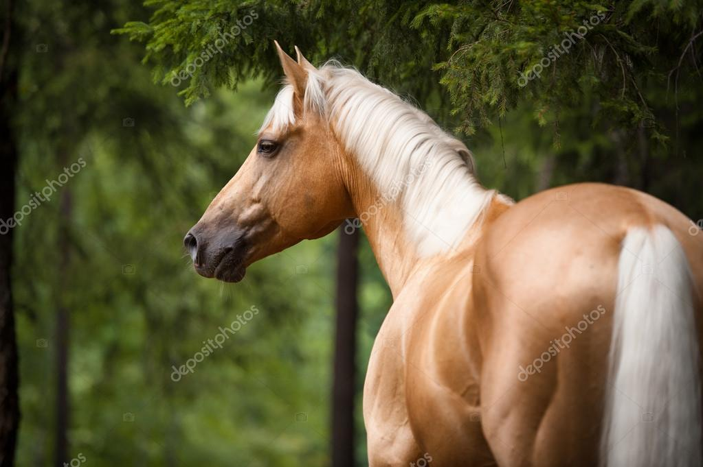 free online dating & chat in white horse beach Horsedate is the best and largest online community for horse lovers to  largest online equine dating site for  finding other horse lovers to chat with or .