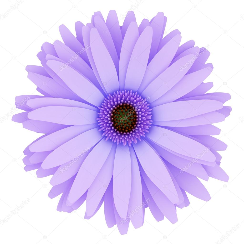 top view of purple flower isolated on white background. 3d illus ...