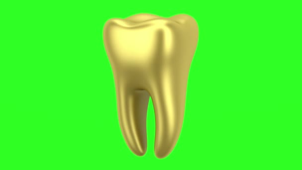 golden human tooth loop rotate on green chromakey background