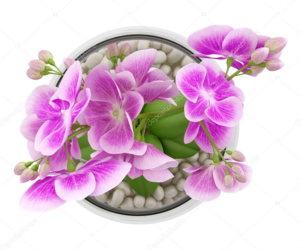 Top view of purple orchid flower in glass vase isolated on white top view of purple orchid flower in glass vase isolated on white stock photo reviewsmspy