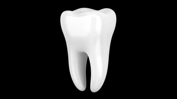 3D menschliche Zahnschlaufe dreht sich auf schwarzem Hintergrund