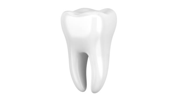 3d human tooth loop rotate on white background