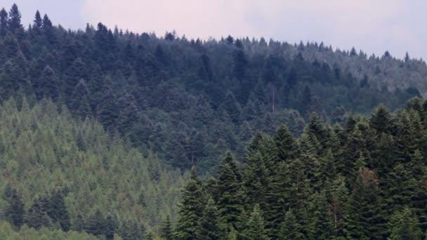 smrkové Lesní krajina