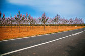 Fotografie paulownia trees planted along the road