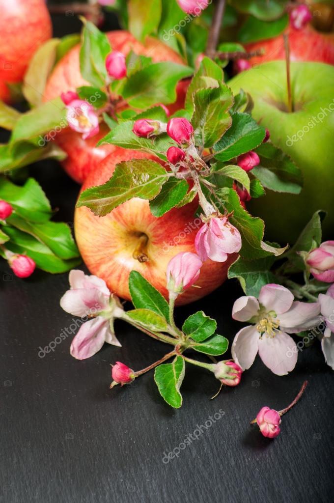 Äpfel und Frühling Rosa Apfel Baum frische Blumen umrahmen ...
