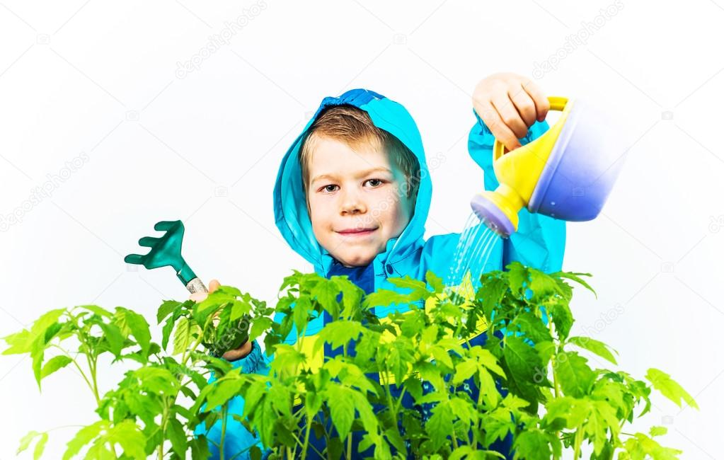 Happy spring gardening boy with seedlings and tools on white background.