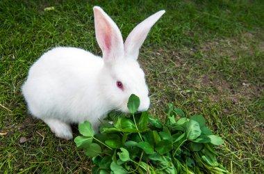 White rabbit is sitting in grass
