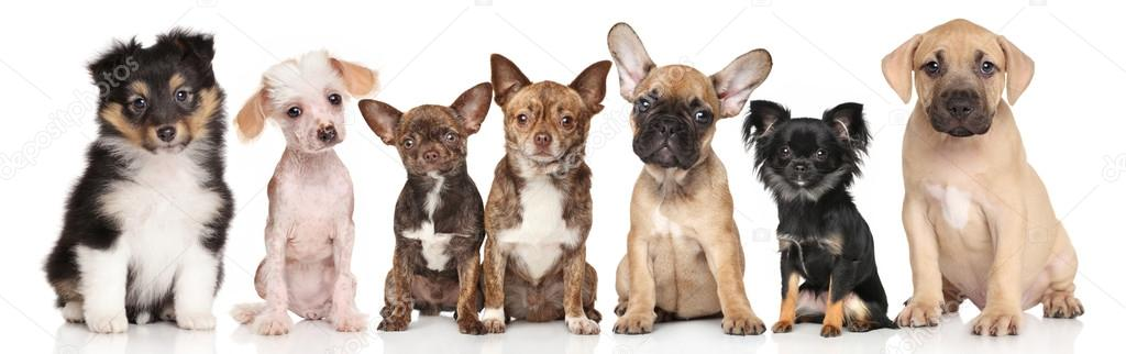 Group Of Puppies On White Stock Photo Fotojagodka 124614256