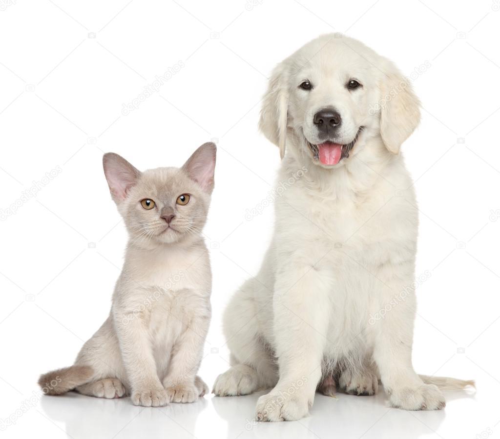 Картинка собаки на белом фоне. Кошка и собака на белом ...