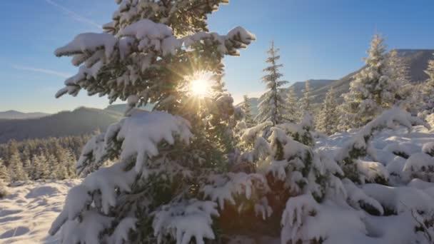 Schöne Winterlandschaft in den Bergen. Die untergehende Sonne bricht durch die schneebedeckten Äste der Tanne. Boden und Bäume sind mit einer dicken Schicht frischen, flauschigen Schnees bedeckt. Toller Platz für