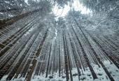 Titokzatos fák a téli erdő