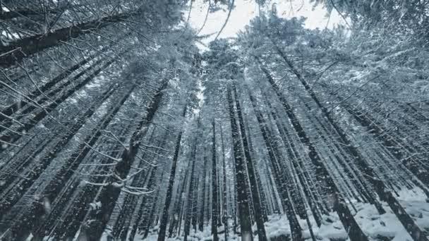 Krajina s padajícím sněhem a sněhu krytá stromy