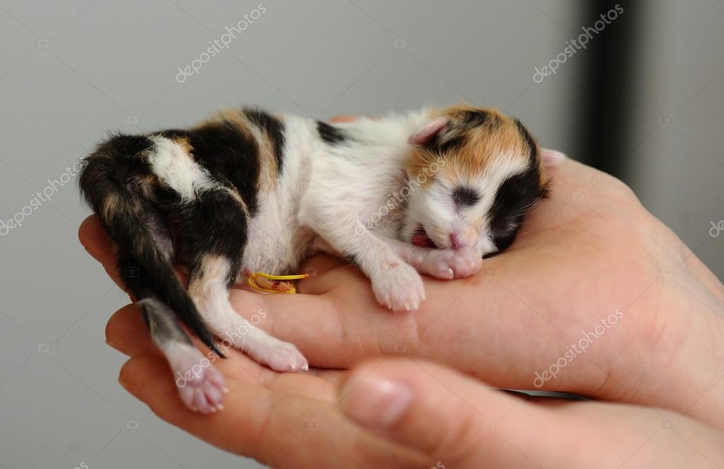 Yeni Doğmuş Yavru Hayvan Hastalıklarıyla Ilgili Klinik Stok Foto