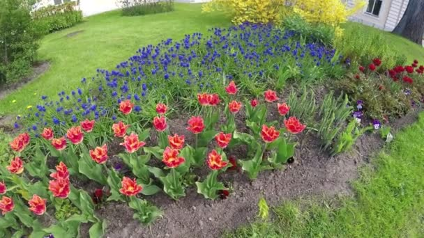 Postel s tulipány a modré Modřenec