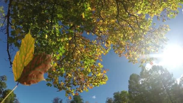 Koruna stromu se třese na pozadí modré oblohy
