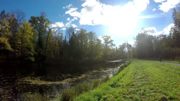 Grünes Gras am Flussufer und der Herbstwald