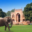 Elephant on a grass before Gate to Itmad-Ud-Daulah's Tomb (Baby Taj) (17th century)at Agra, Uttar Pradesh, India — стоковое фото #119706242