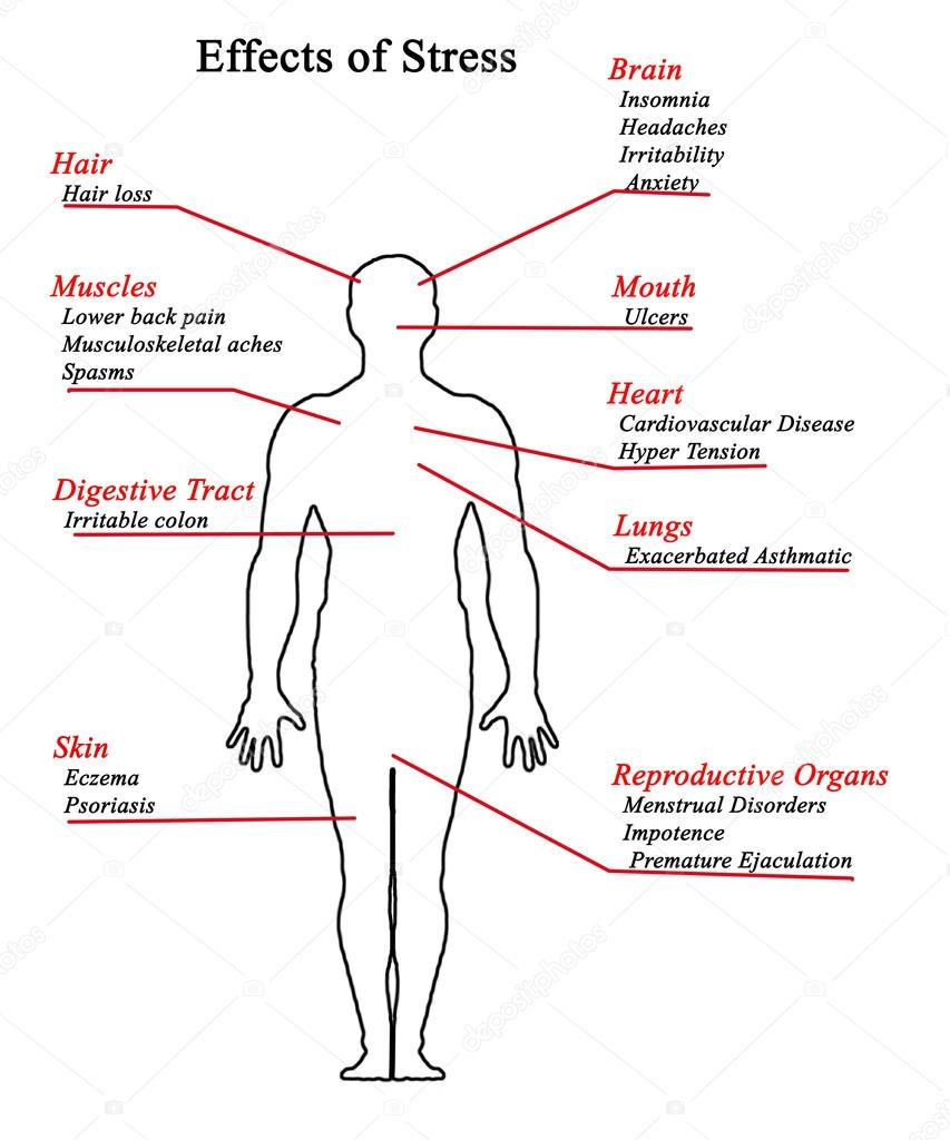 effects of stress on the body a diagram