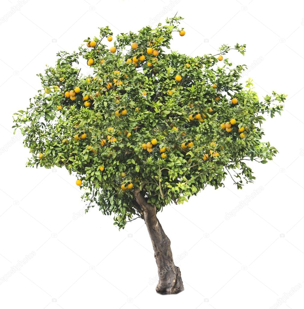 how to build an orange tree