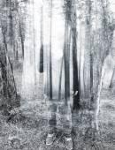 doppia exposured foresta e luomo