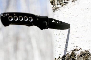 Knife stuck in a birch tree