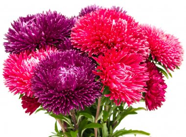elegant beautiful flowers