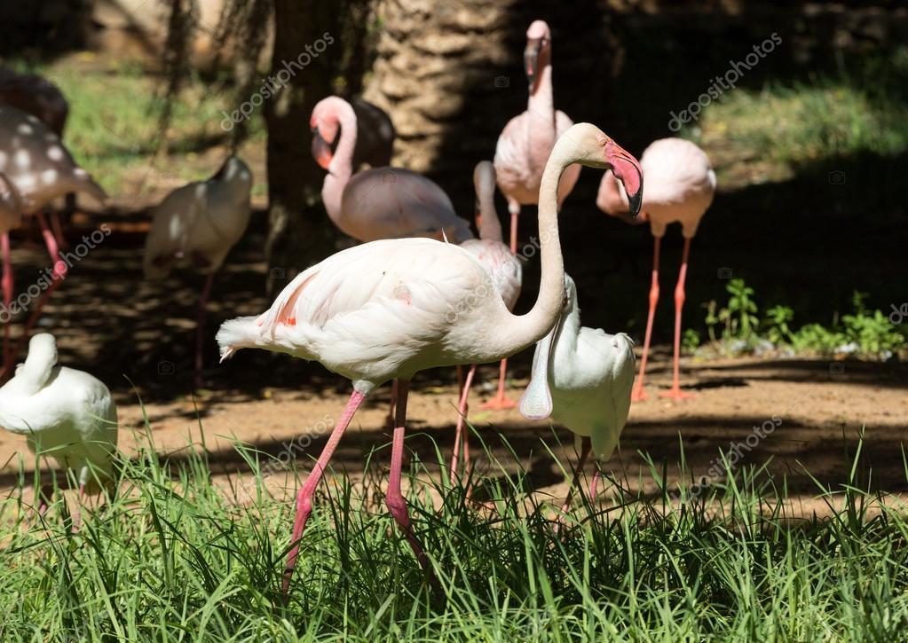ωραίο μεγάλο πουλί εικόνες Μπορείτε να πεθάνετε από το πρωκτικό σεξ