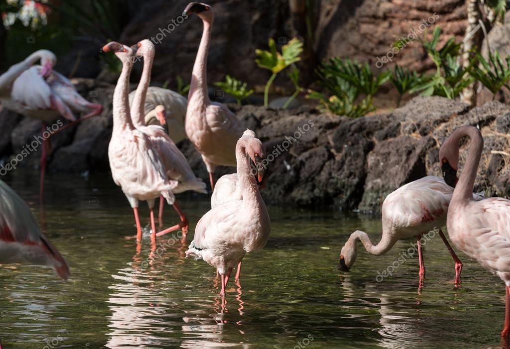 ωραίο μεγάλο πουλί φωτογραφίες γυμνό Γκρης