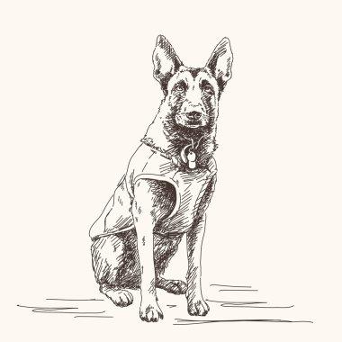 Sketch of Belgian Shepherd dog