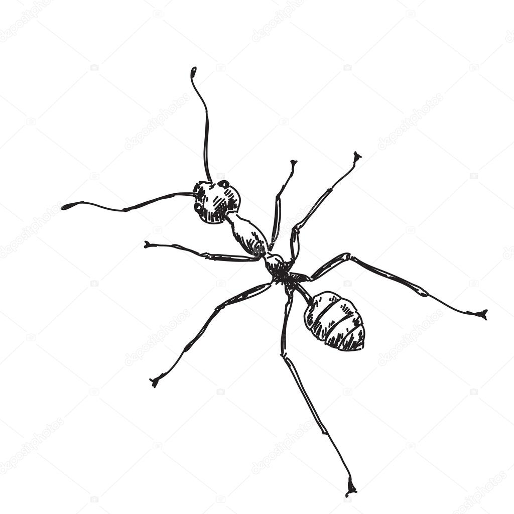 Dibujo de hormiga — Vector de stock © OlgaTropinina #62680367