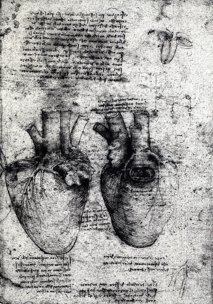 viejos dibujos de anatomía — Foto de stock © janaka #53176267