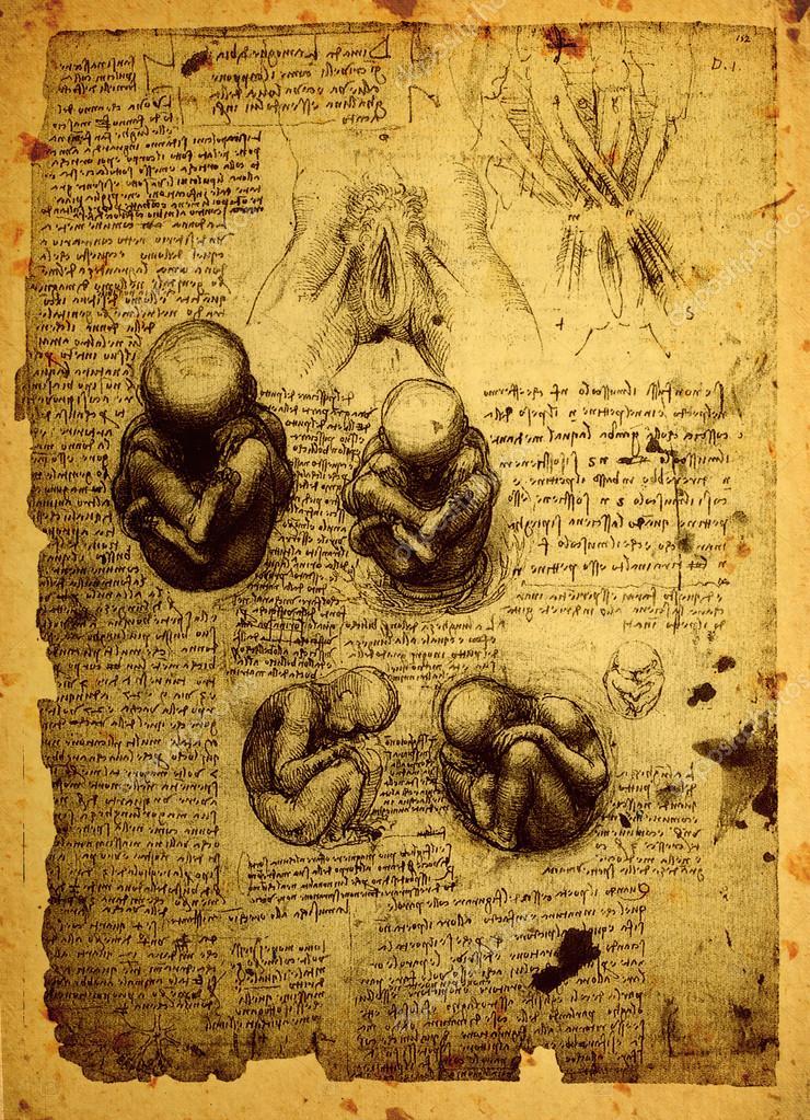 viejos dibujos de anatomía — Foto de stock © janaka #53222473