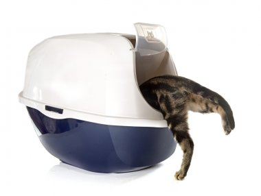 Closed cat litter box