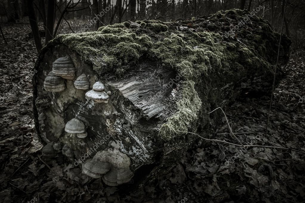 Lying tree trunk