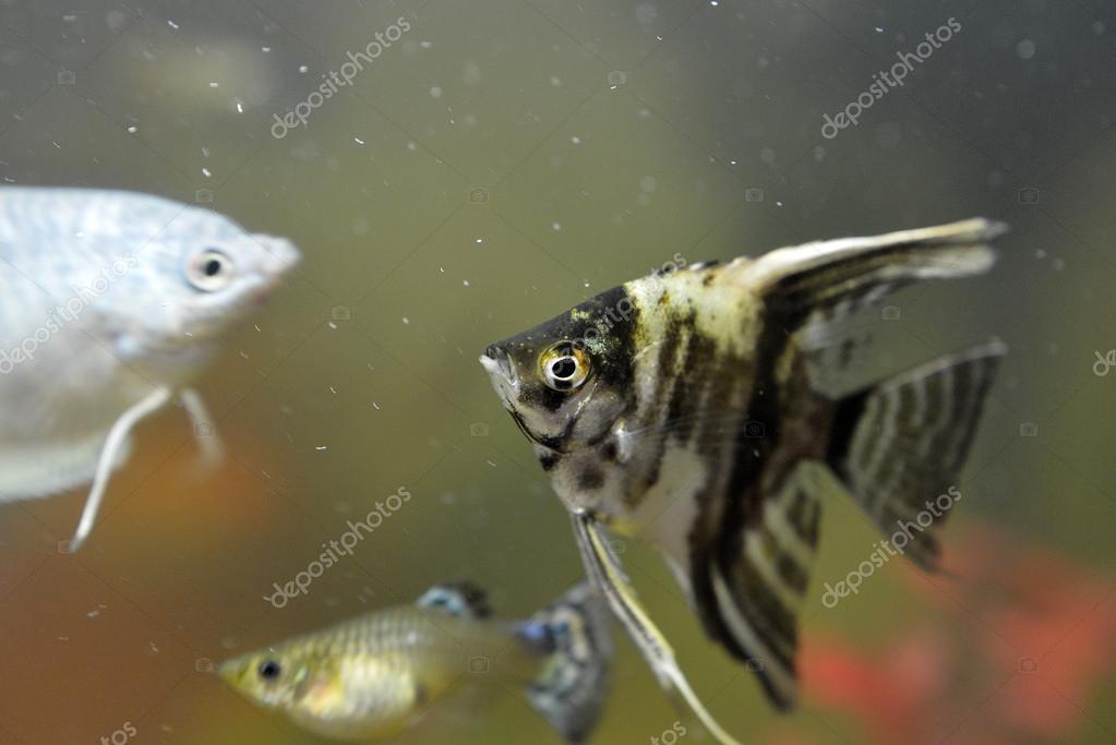 Fisch für Sie datieren Laser-Code-Dating