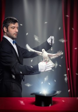 magic trick with pigeon