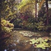 Tropické rybník v létě