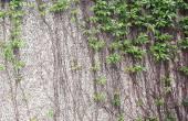 Fotografia Vitigni che crescono su una parete di roccia - grunge astratto