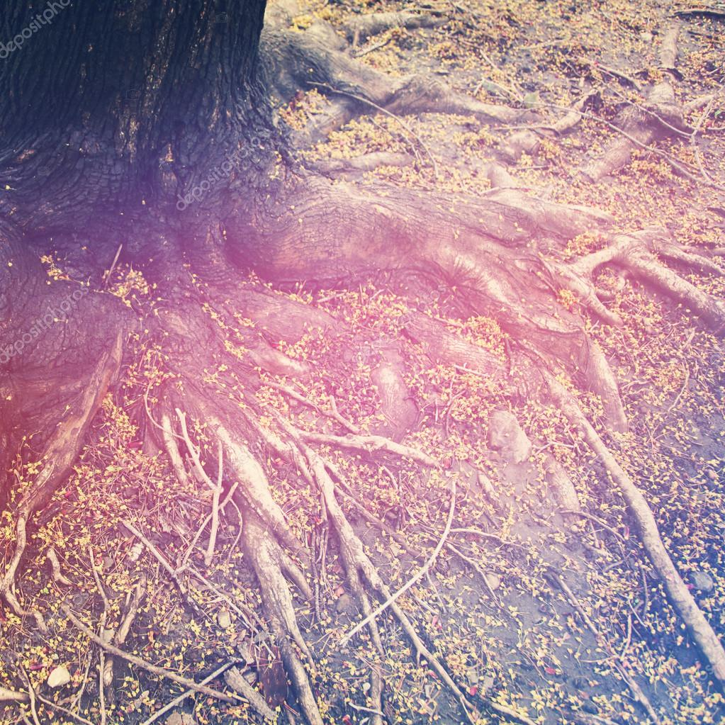 Roots of a tree with filter