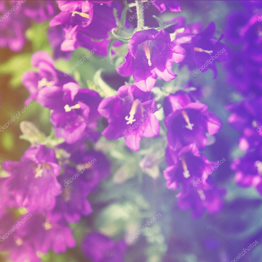 Purple Bell Flowers Stock Photo Melking 53032869