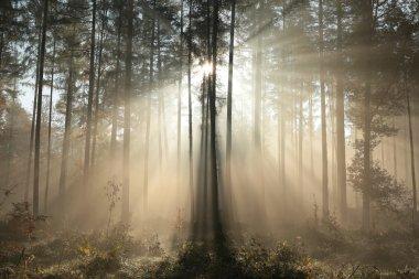 Autumn coniferous forest