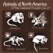 Fotografia Animali del Nord America e tracce di animali, impronte