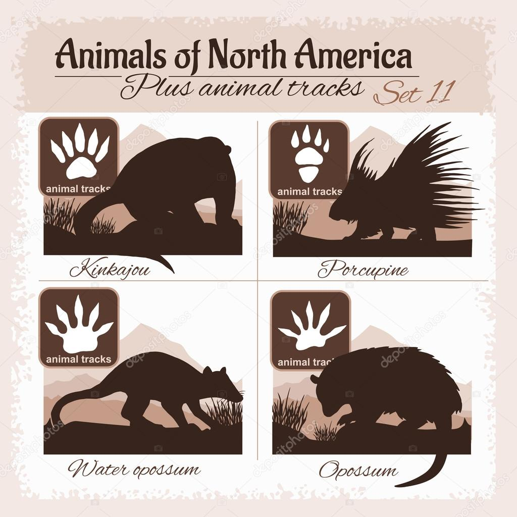 north america animals and animal tracks footprints stock vector