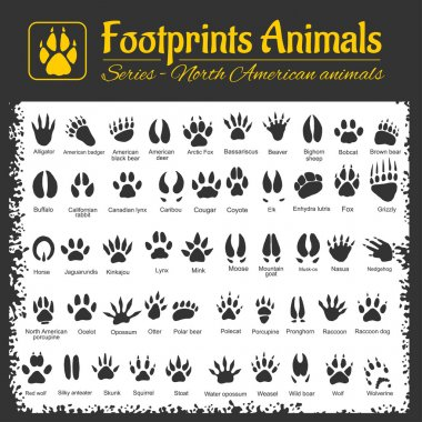 Animal Tracks - North American animals