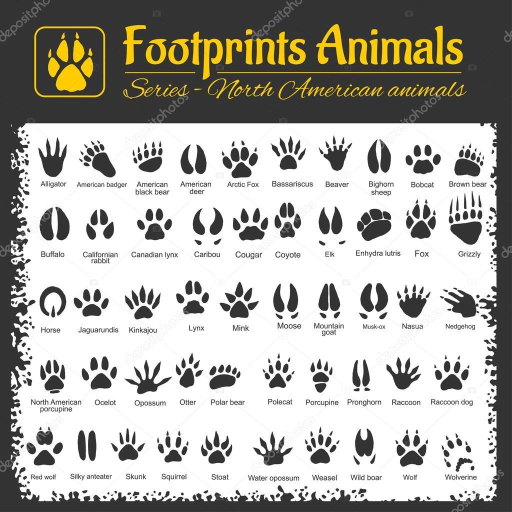Good Jeep Names >> Animal Tracks Identification Animal Footprints Pictures | Upcomingcarshq.com