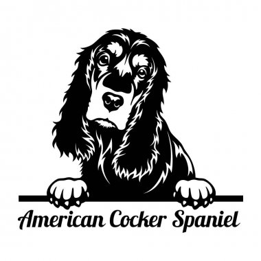 American Cocker Spaniel Peeking Dog - head isolated on white - vector stock icon
