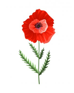 Poppy flower. Watercolor hand drawn poppy. Isolated botanical symbol of blooming red poppy blossom. Floral design for decor or holiday wedding greeting card template. icon