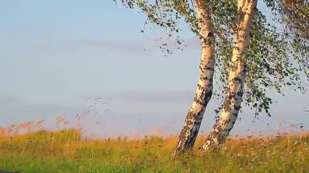 fotage série nature